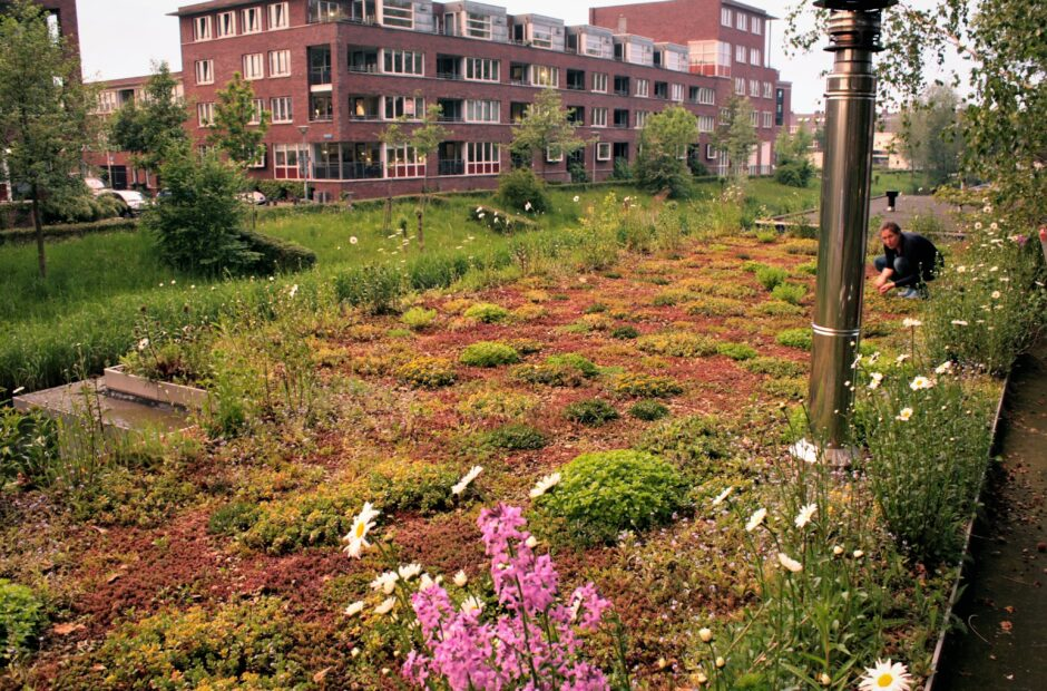 Nature-based solutions voor duurzame steden